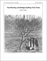 top working fruit trees